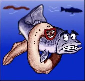 sea lamrey, belut laut , belut penghisap darah,
