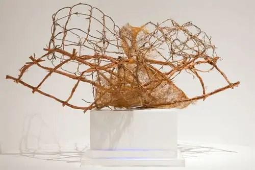 Mariano Concha, exposición Frágil Naturaleza