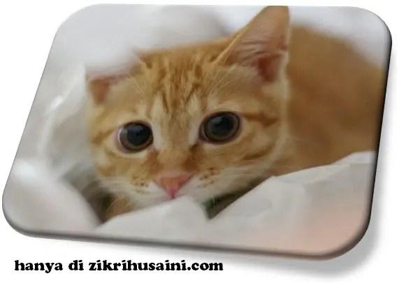 cute cat, kucing cantik, cat smile, cute kitten, cat, cat adorable, cat photoshop, cat beautiful, cat dog,