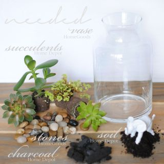 terrarium tutorial succulents materials