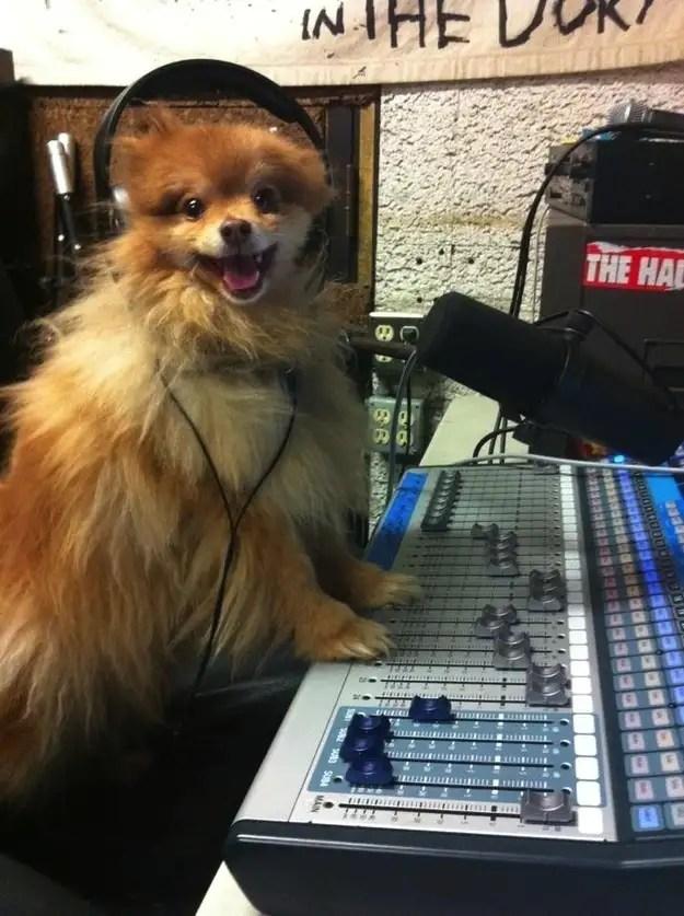 enhancedbuzz16289136380 - #Fotos 33 perros totalmente descontrolados