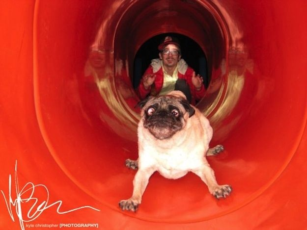enhancedbuzz29759136422 - #Fotos 33 perros totalmente descontrolados