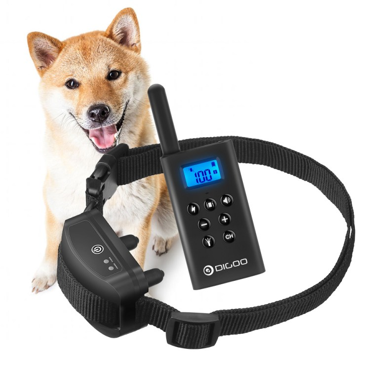 est Dog Training Basic Obedience Course USA 2021