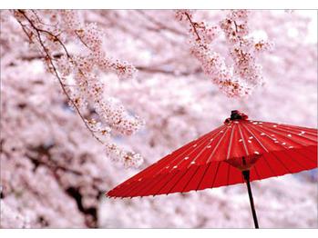春が来ました!_20170330_1