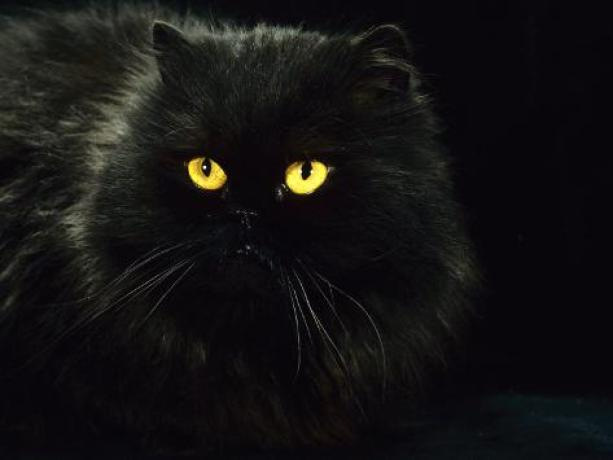 Image result for cat eye at night