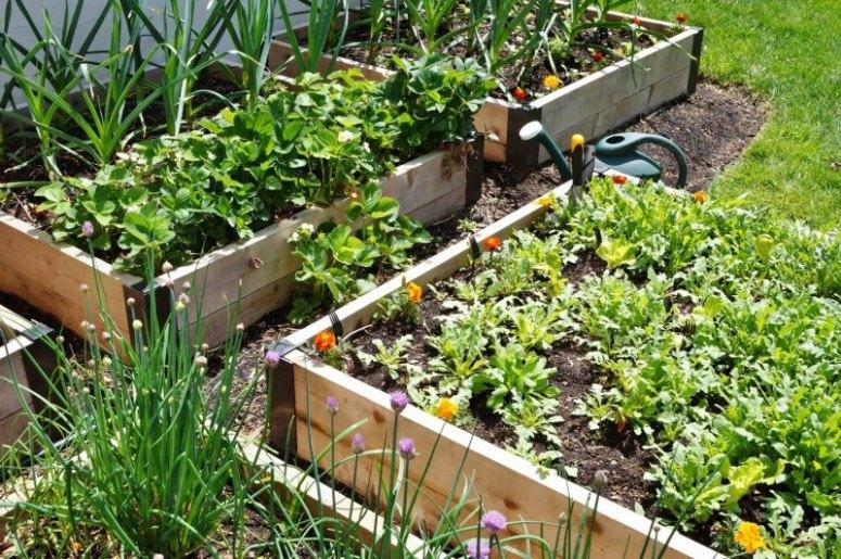 在升高花床上种菜