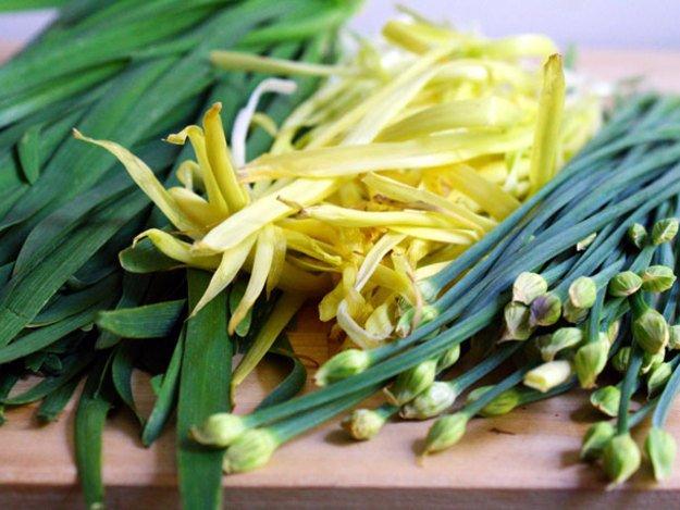 什么菜最容易种?韭菜