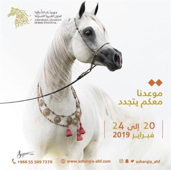 مهرجان الشرقية للخيل العربية الأصيلة