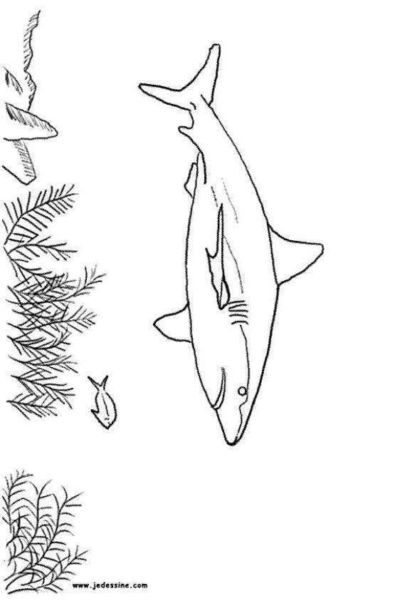 Hai Zum Ausmalen Zum Ausmalen Dehellokidscom
