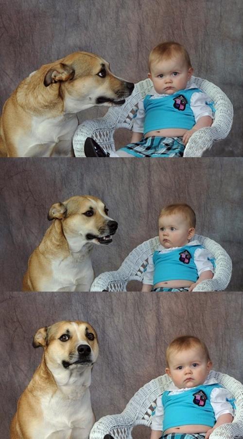 Dog Meme Png