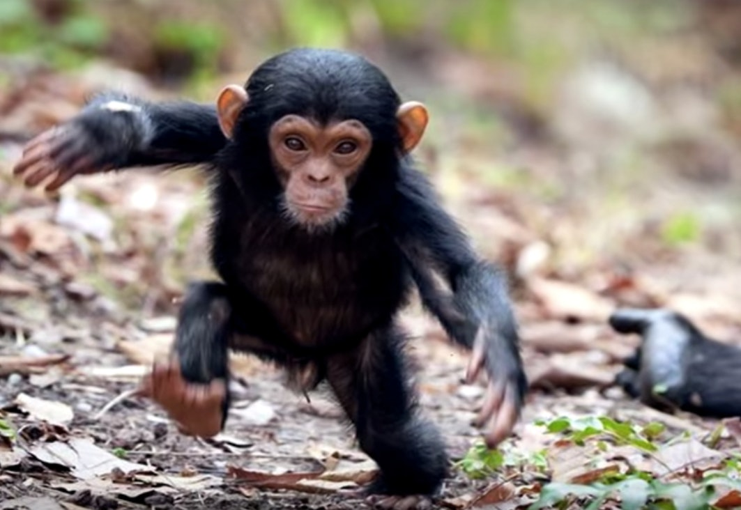 4 Super Cute Animals That Can Actually Kill You Horribly