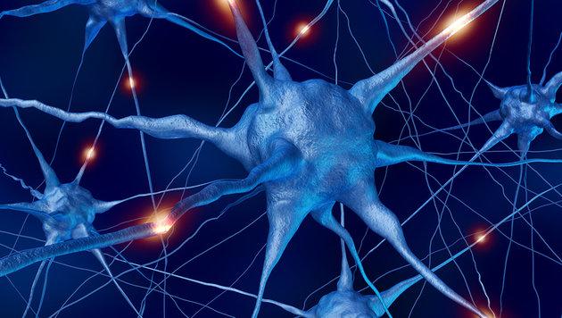 https://i2.wp.com/imgl.krone.at/Bilder/2016/12/21/Forscher-entdecken-Vorratslager-in-Nervenzellen-DNA-Kopien-story-545396_630x356px_90b501f5ab230eaf556c6734f8b32485__nervenzelle-s1260_jpg.jpg