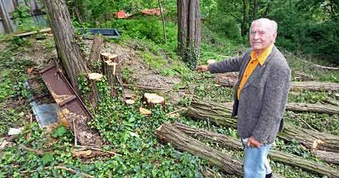 Penzinger Grünoase soll Bauprojekt geopfert werden (Bild: Klemens Groh)