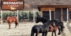 Разходка с кон на открито, плюс ползване на детски кът