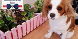 Къпане, изсушаване и разресване на куче - без или със подстригване