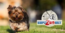 Подстригване на куче до 10кг и изрязване на нокти - без или със къпане и балсам за подхранване на кожата и косъма