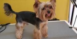 Къпане, изсушаване и разресване, цялостен грууминг или SPA терапия на куче до 10кг
