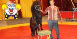 Илюзии, акробатика и клоунада! Вход за Цирк Орбита на 7, 8 или 9 Август