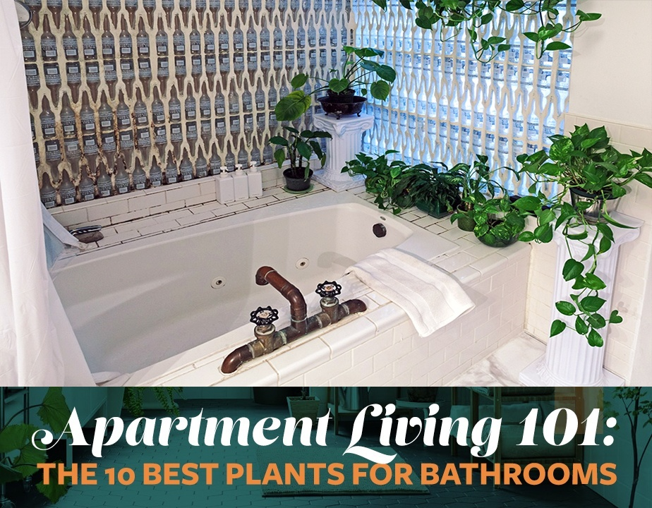 Apartment Living 101 The 10 Best Plants For Bathrooms 6sqft