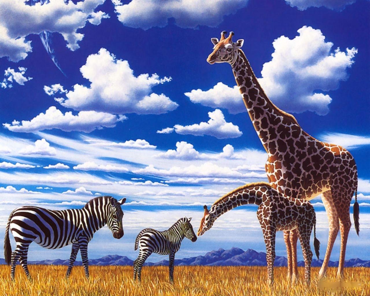 Zebra And Giraffes Wallpapers