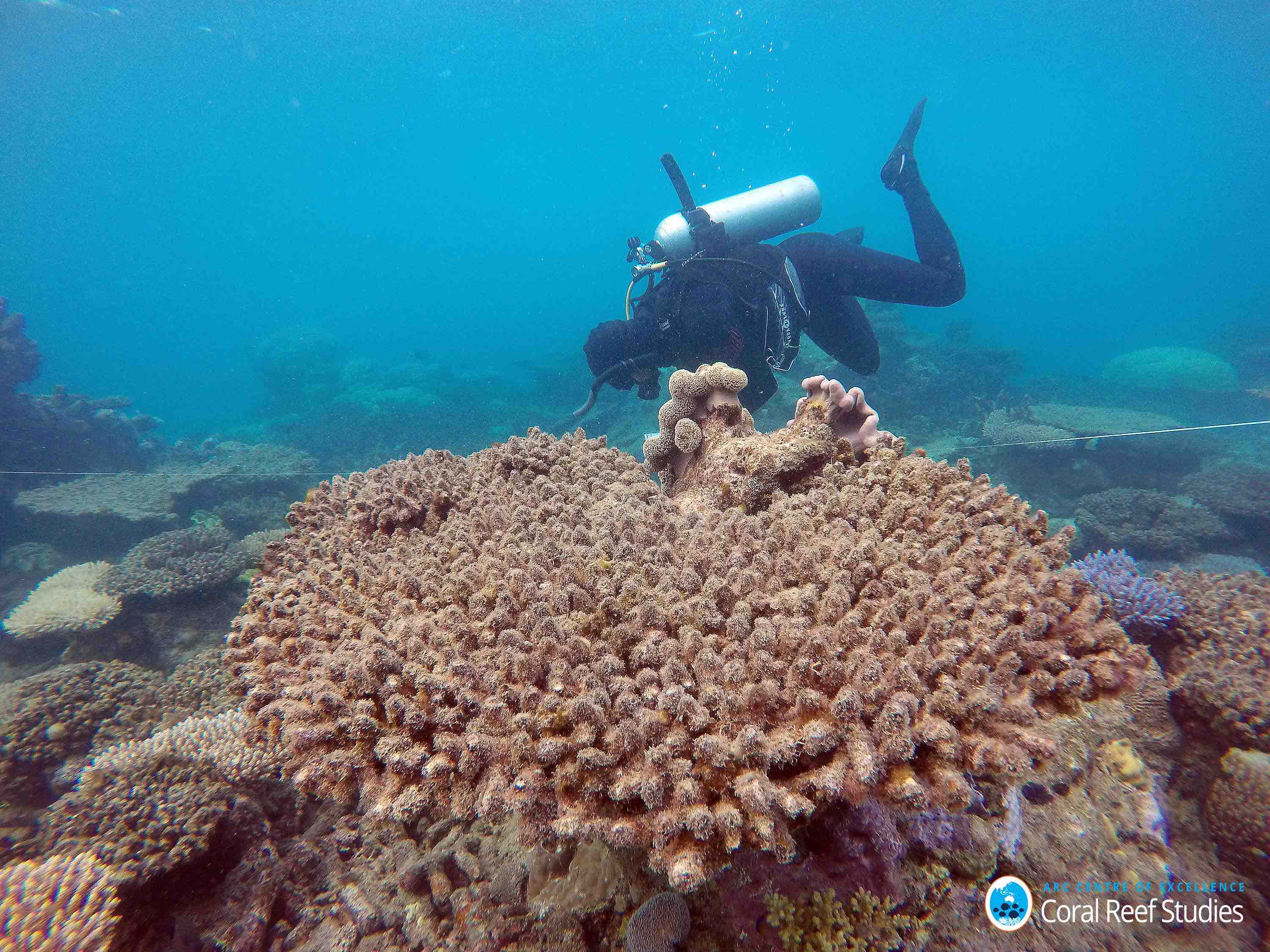 Great Barrier Reef Suffered Worst Coral Off On Record