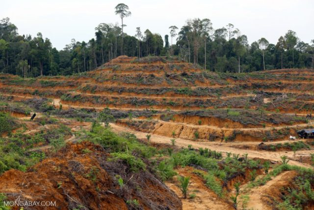 Illegal deforestation for an oil palm plantation in Aceh Tamiang in 2014. Photo by Rhett A. Butler / Mongabay