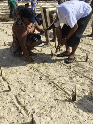 Claire Anterea, climate activist with Kiri-CAN with current president of Kiribati, Taneti Mamau, planting mangrove trees to improve shoreline health and climate resiliency. Credit: Claire Anterea.