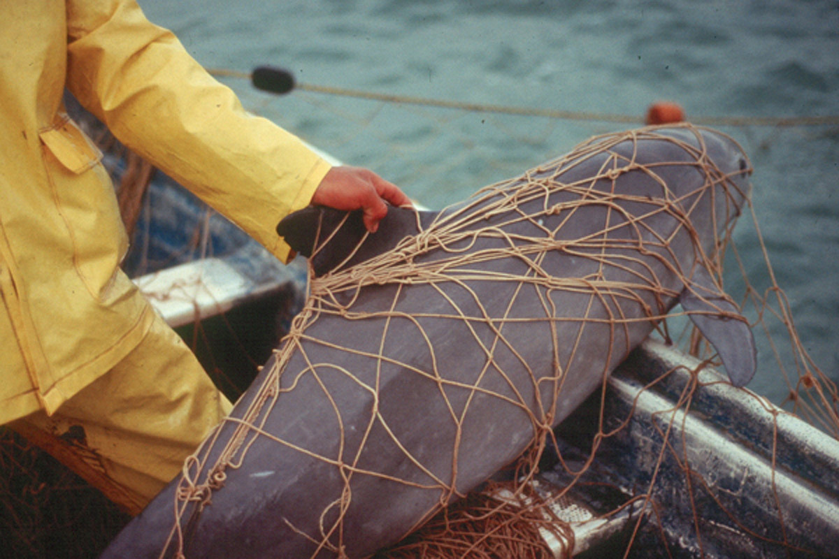 Suspected totoaba poachers shot by authorities in Mexico's Sea of Cortez