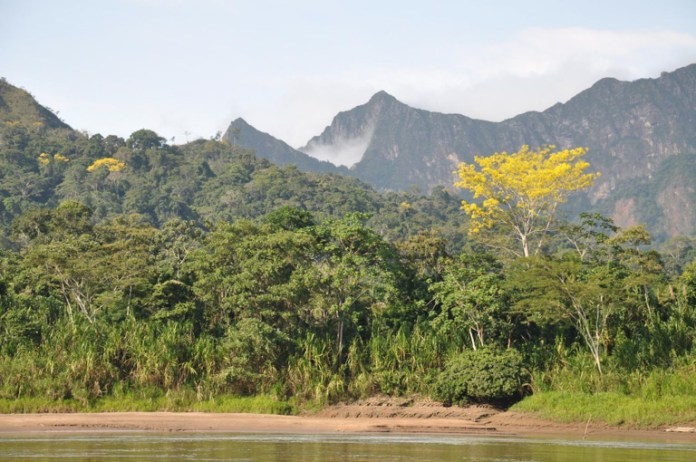 The research showed some wilderness areas, such as areas surrounding Madidi National Park in the Bolivian Amazon, play an extraordinary role in their respective regional contexts, where their loss would drastically reduce the probability of persistence of biodiversity. Image by Rob Wallace/WCS.