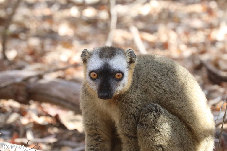 'Intense' human pressure is widespread among terrestrial vertebrates, study finds