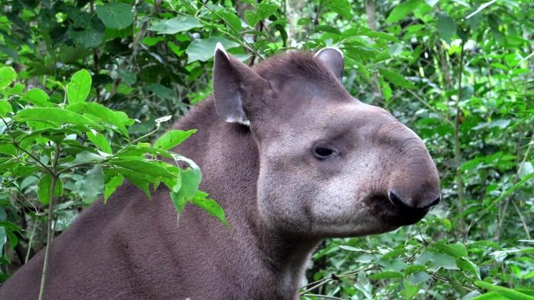 Wildlife emergency in Bolivia as fires threaten animal sanctuaries