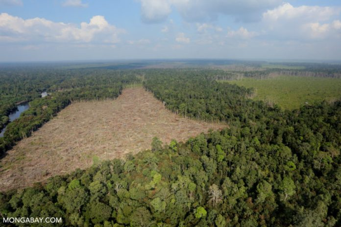 Deforestation for palm oil production in Sumatra, Indonesia. Photo by Rhett A. Butler.