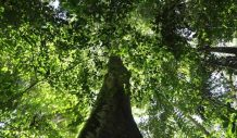 As Amazon forest-to-savanna tipping point looms, solutions remain elusive