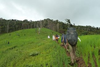 Reforested areas rival mature forests in securing water, study finds
