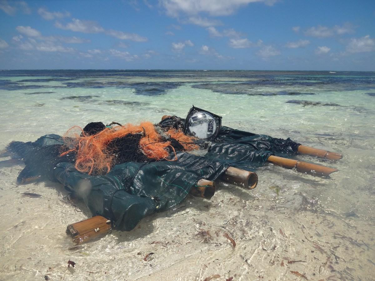 """Los barcos atuneros europeos vierten los residuos de la pesca en las aguas de Seychelles """"con impunidad"""""""