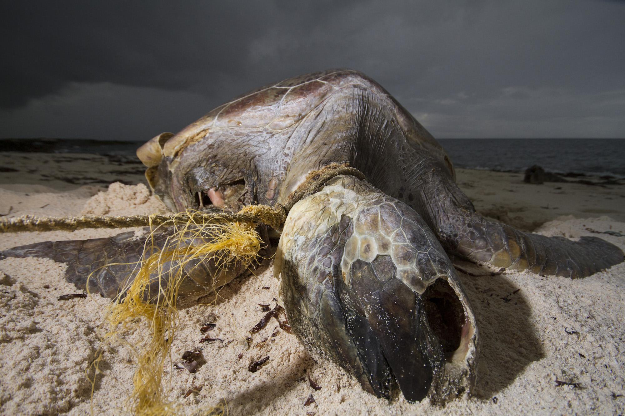 European tuna boats dump fishing debris in Seychelles waters 'with impunity'