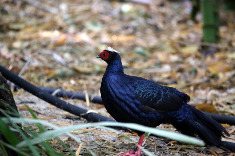 Camera trap pics of rare species in Vietnam raise conservation hopes