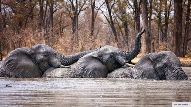 African Parks secures 0M for conservation in Africa