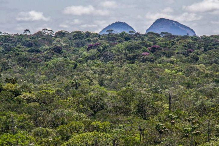cambio_climatico-pueblos_indigenas-amazonia-bosques-reforestacion-colombia-2