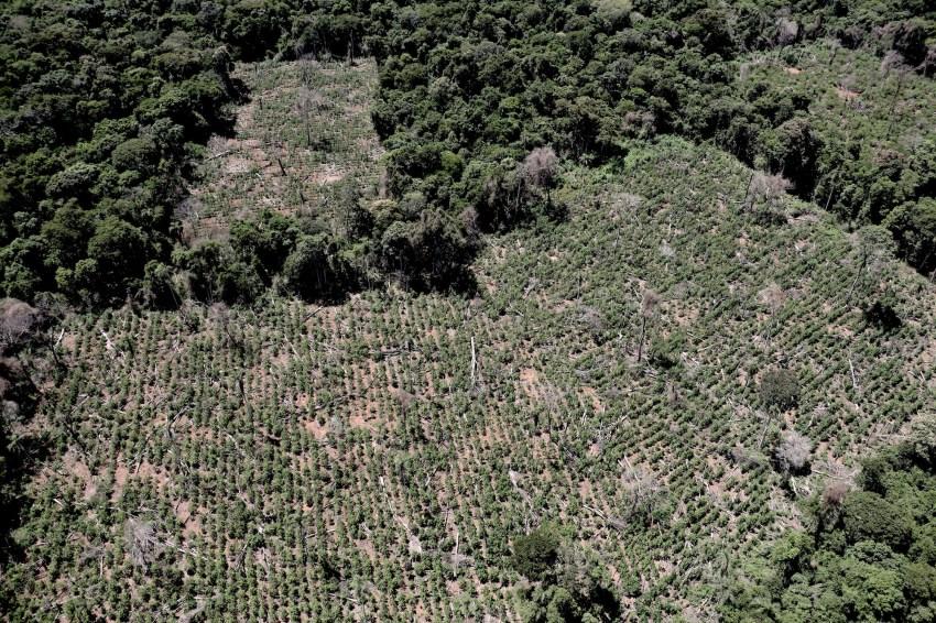 Paraguay: Congreso plantea medidas frente la deforestación en el Bosque Atlántico