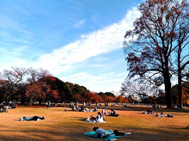 東京賞銀杏