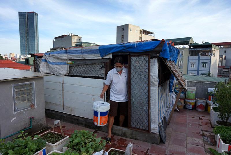 Nghề nông, Hà Nội, trồng rau, nuôi gà