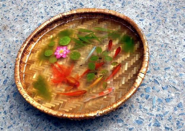 Tranh 3D, tranh cá, tranh cá 3D, 8x, Lê Phạm Chiến Thắng, tranh nghệ thuật, tranh-3D, tranh-cá, tranh-cá-3D, Lê-Phạm-Chiến-Thắng, tranh-nghệ-thuật