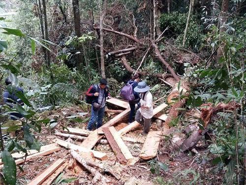 Ngồi nhà, Đắk Lắk, Quảng Nam, rừng, Ấn tượng trong tuần, Kỳ Duyên, nhà báo Kim Dungpơmu,