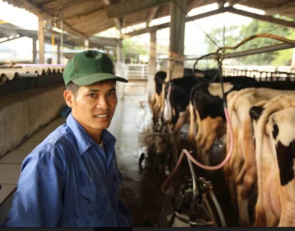 bò sữa mộc châu, nuôi bò sữa, thành tỷ phú bò sữa, thị trấn có 600 tỷ phú,  thị trấn nông trường Mộc Châu