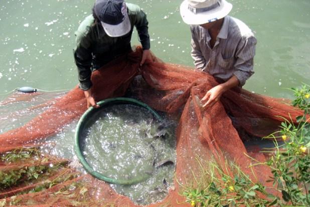 rửa-gà, rửa-cá, thức-ăn-công-nghiệp, nuôi, thực-phẩm-sạch, Tết, kháng-sinh, ung-thư