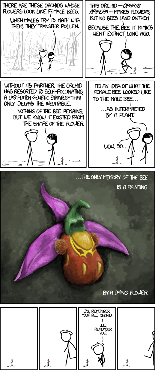 XKCD Orchids