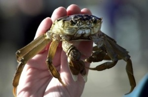 Crabs arrive at Belfast Airport