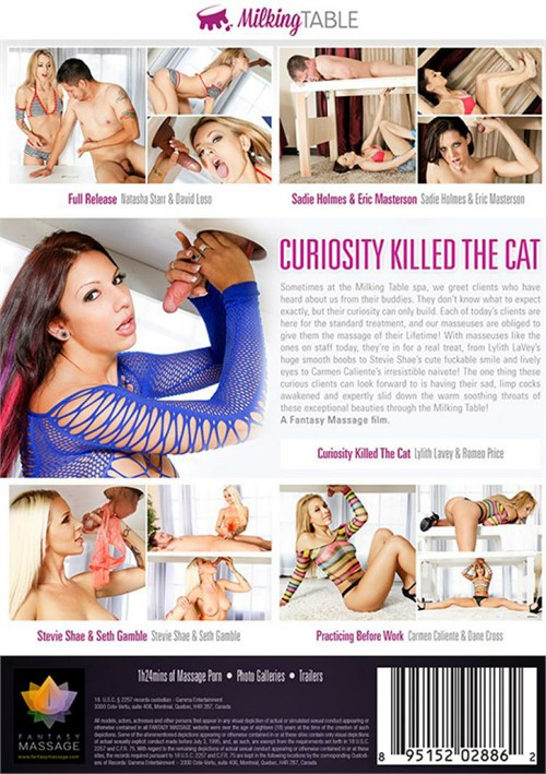 Curiosity Killed The Cat Porn Dvd
