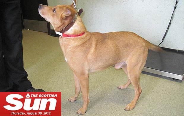 Recuperado e saudável, Snopp foi adotado e hoje vive com uma nova família (www.thescottishsun.co.uk)